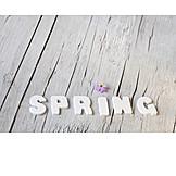 Spring, Word, Spring