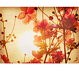 Flower, Anemone, Hippie