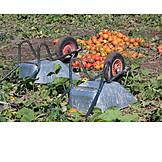 Harvest, Pumpkin Field