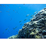 Coral reef, School of fish