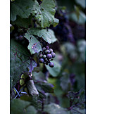 Grape, Vine, Red grapes