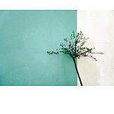 Facade, Rose tree
