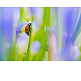 Blade of grass, Lady beetle