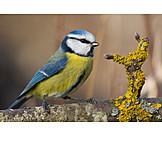 Bird, Tomtit