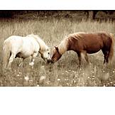 Friendship, Togetherness, Horses