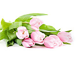 Tulip, Bouquet, Tulips bouquet