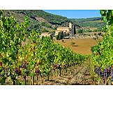 Vineyard, Tuscany, Sant antimo