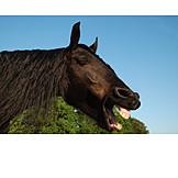 Horse, Yawning