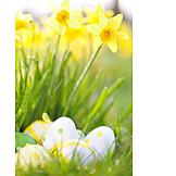 Easter, Easter Nest, Daffodil