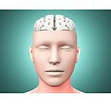 Intelligence, Brain, Neurology, Medical Illustrations