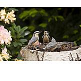 Mockingbird, Nuthatch