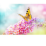 Butterfly, Spring