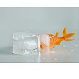 Thawing, Freezing, Goldfish, Stuck