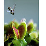 Danger & Risk, Fly, Venus Flytrap
