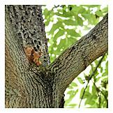 Curiosity & expectation, Red squirrel