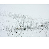 Grasses, Winter, Snowy