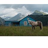 Horse, Georgia, Tuschetien