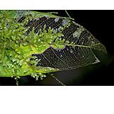 Vein, Leaf