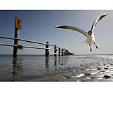 Flying, Gull