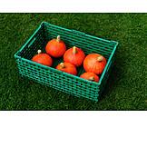 Squash, Harvest, Chest