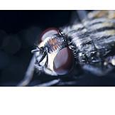 Insekt, Makro, Fliege, Facettenaugen