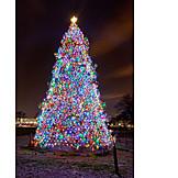 Christmas tree, Washington