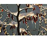 Winter, Twig, Ice