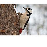 Woodpecker, Woodpecker