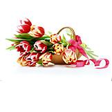 Tulip, Flower gift, Spring decoration