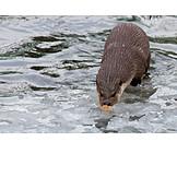 Wildlife, Otter