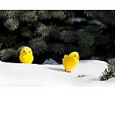 Easter, Snow, Easter Chicks