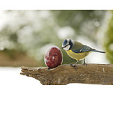 Easter Egg, Spring, Great Tit