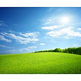 Landscape, Field, Meadow, Summer