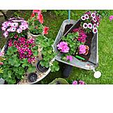 Garden, Gardening, Planting, Repot