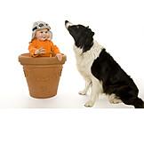 Baby, Fun & Games, Dog