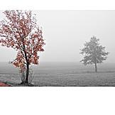 Tree, Autumn, Fog
