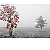 Tree, Autumn, Fog