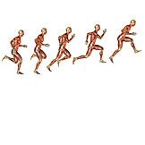Springen, Anatomie, Medizinische Grafik