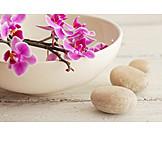 Wellness & Relax, Zen, Orchideenblüte