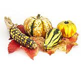 Autumn, Squash, Ornamental Gourd
