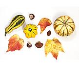 Autumn Leaves, Autumn, Squash