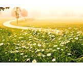 Natur, Weg, Wiesenblume