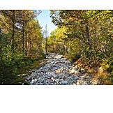 Forest, Riverbed, Rondane national park