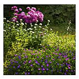 Garden, Flora