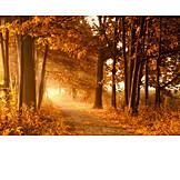 Autumn, Trees, Autumn Forest, Tree
