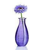 Flower vase, Gerbera, Plastic flower