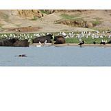 Africa, Queen Elizabeth Nationalpark, Wildlife