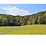 Forest, Autumn, Deciduous Forest