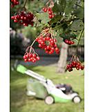 Garden, Lawn Mower, Allotment