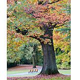 Park, Autumn, Autumn